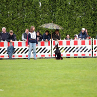 20130707_1775568380_dechiara_vom_sassenburger_land_5